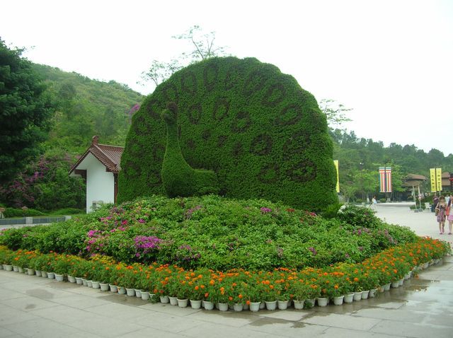 Зелёный павлин на входе в буддийский комплекс Наньшань. Хайнань