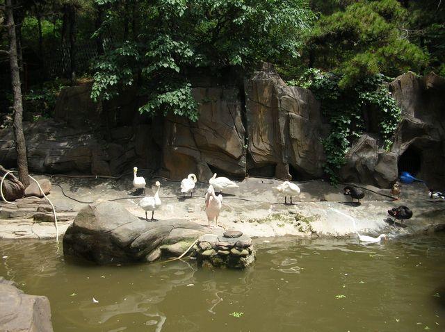 Озеро с водоплавающими птицами. Бэйдайхе. Парк птиц.