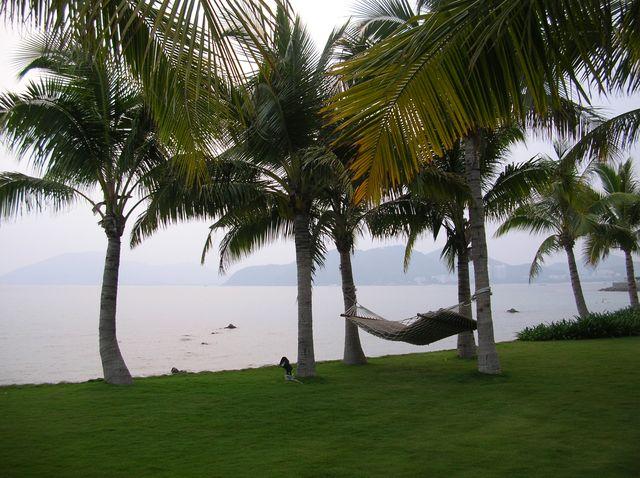 Гамак среди пальм. Отель Мандарин. Хайнань