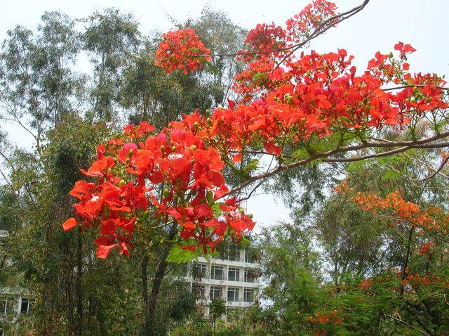 Цветущие растения на Хайнане
