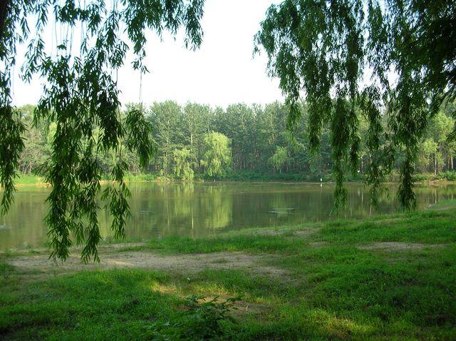 Озеро с птицами в зоопарке г. Бэйдайхэ