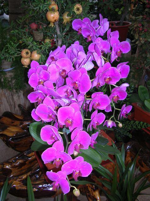Орхидеи на сельскохозяйственной ферме