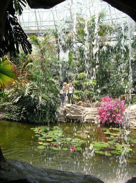 Тропические растения за струями водопада. Далянь