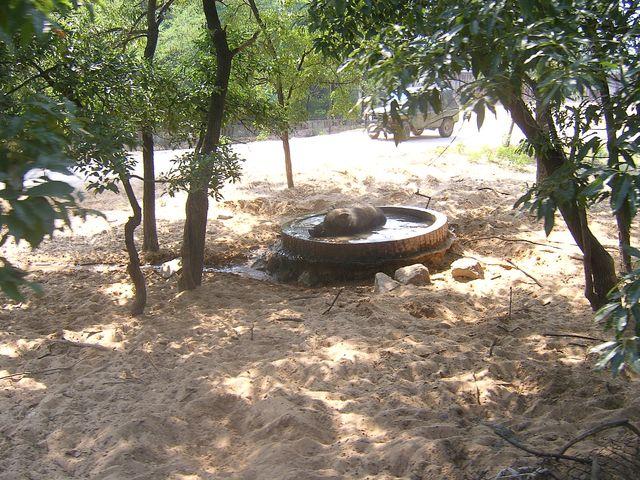Самую жару животные зоопарка пережидают в маленьких бассейнах. Бэйдайхе