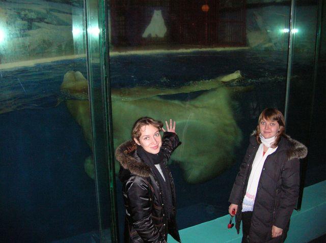 Белый медведь наслаждается купанием в большом стеклянном аквариуме. Харбин