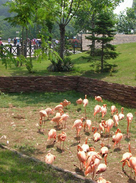 Розовые фламинго в зоопарке Даляня