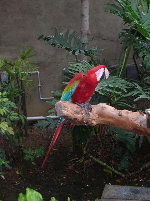 Попугай Ара. Зоопарк Дяляня