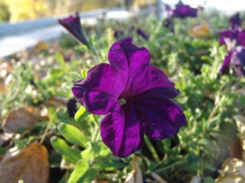 Цветы в парке г. Хэйхэ