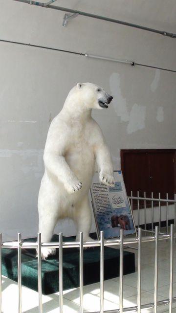 Чучело белого медведя в Даляньском музее природы