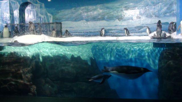 Пингвины в океанариуме Даляня