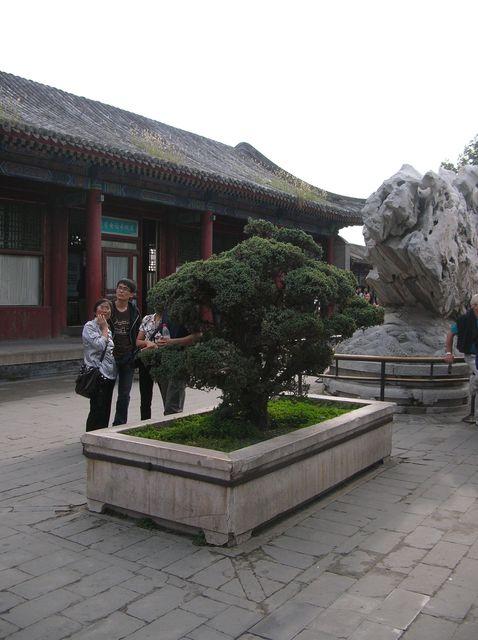 Бансай - образец садово-паркового искусства. Пекин