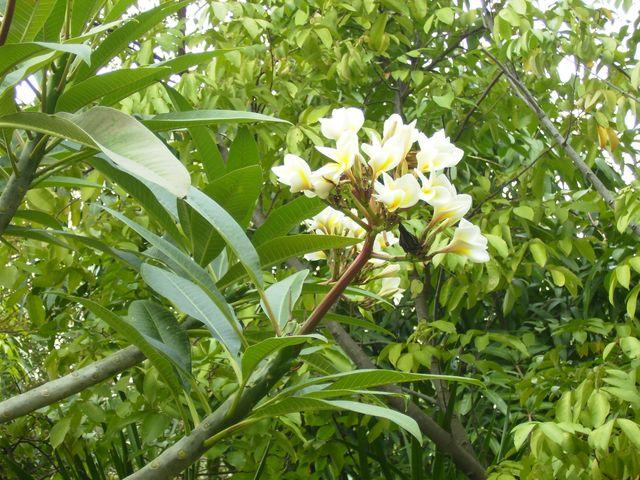 Цветы в парке. Хайнань