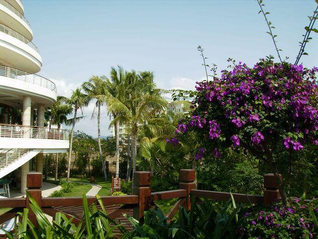 Внутренние дворики гостиниц утопают в цветах и зелени. Санья