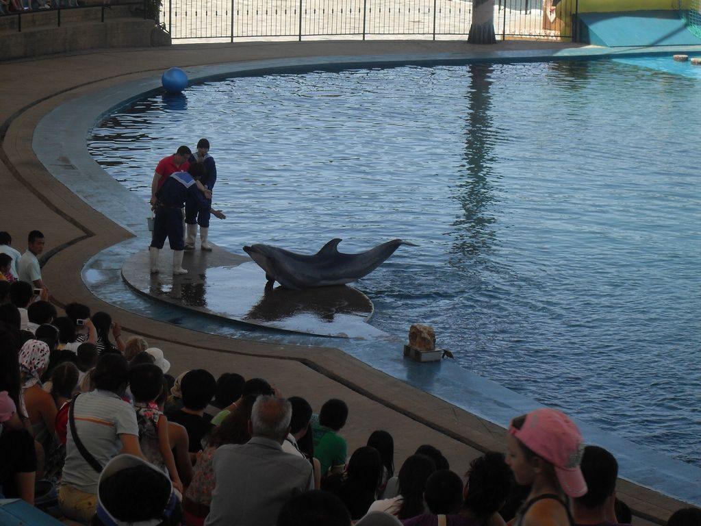 Шоу дельфинов. Аквапарк, Шанхайгуань