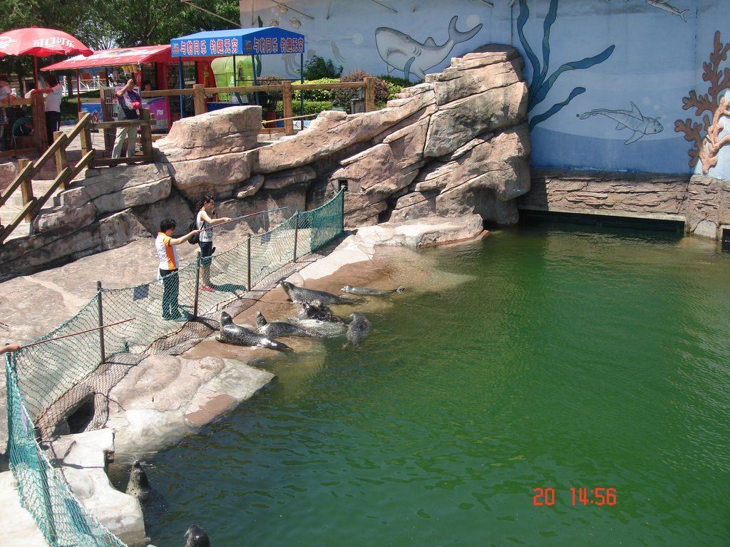 Вольер с тюленями. Шанхайгуань