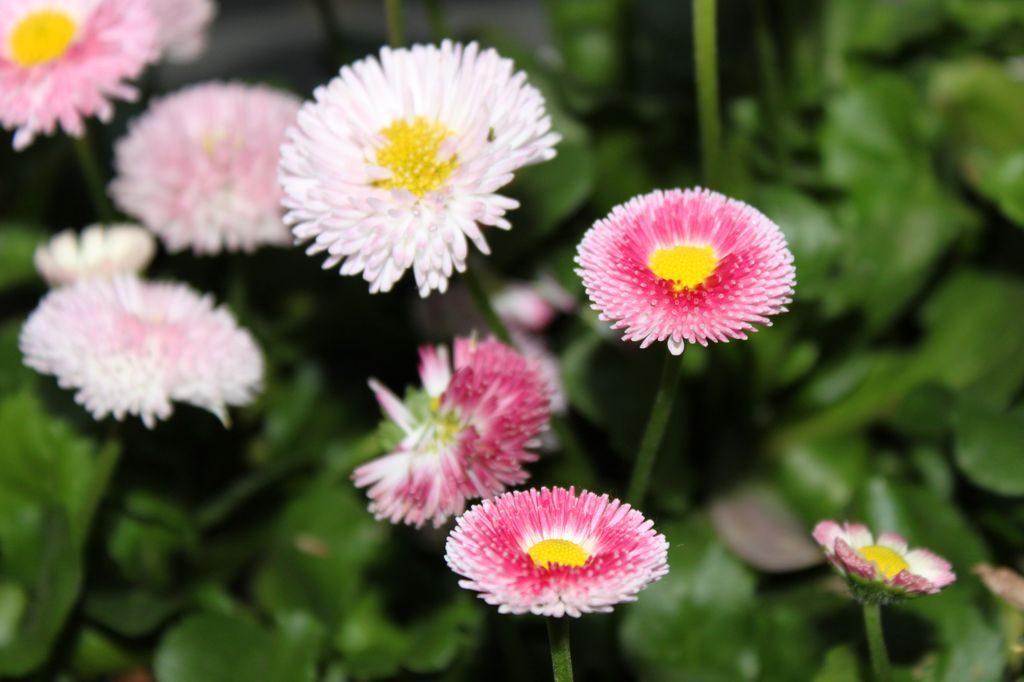 Шанхайские цветы