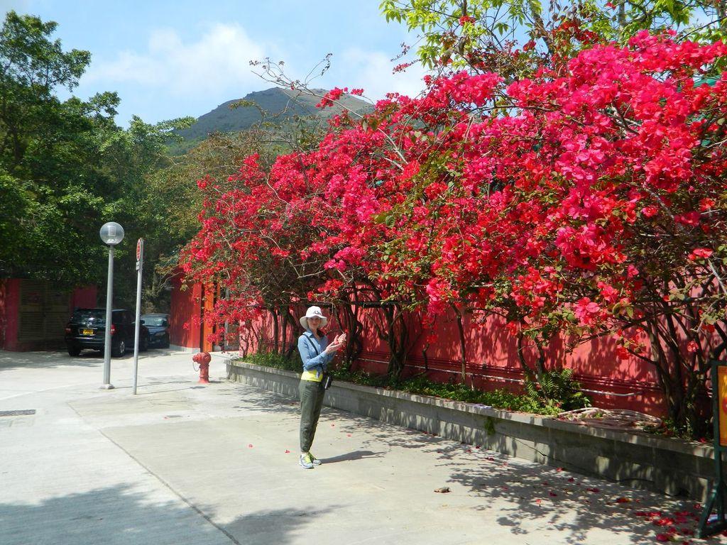 Цветы возле монастыря «По Лин». Гонконг