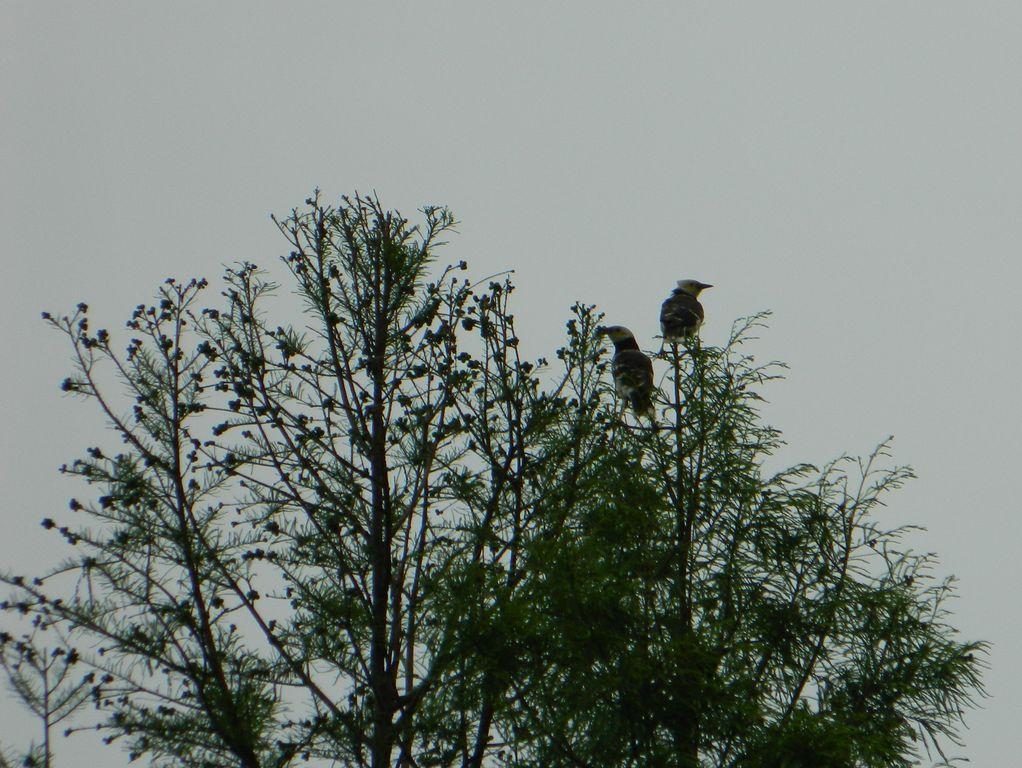 Птицы на дереве в парке водно-болотных угодий, Гонконг