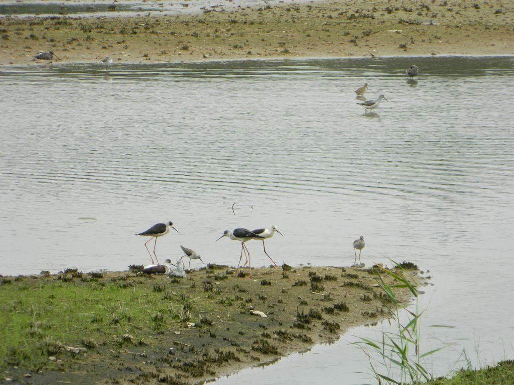 Озеро с околоводными птицами, Hong Kong Wetland Park