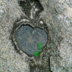 Сердце на камнях