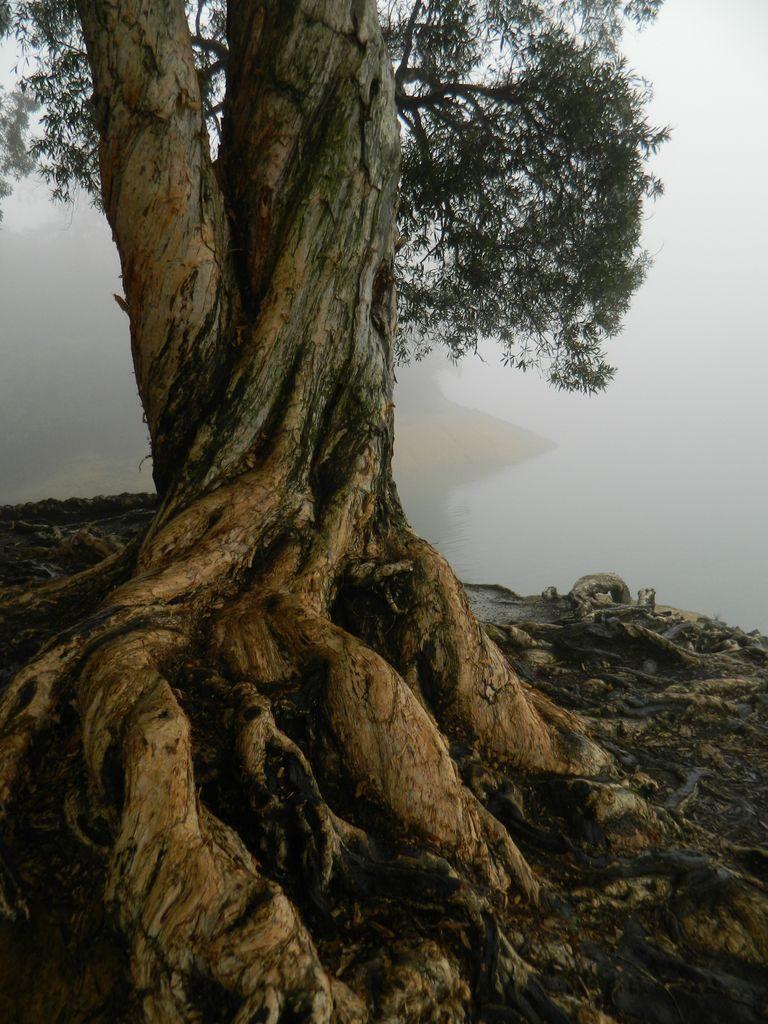 Сказочные деревья Shing Mun Country парка, Гонконг