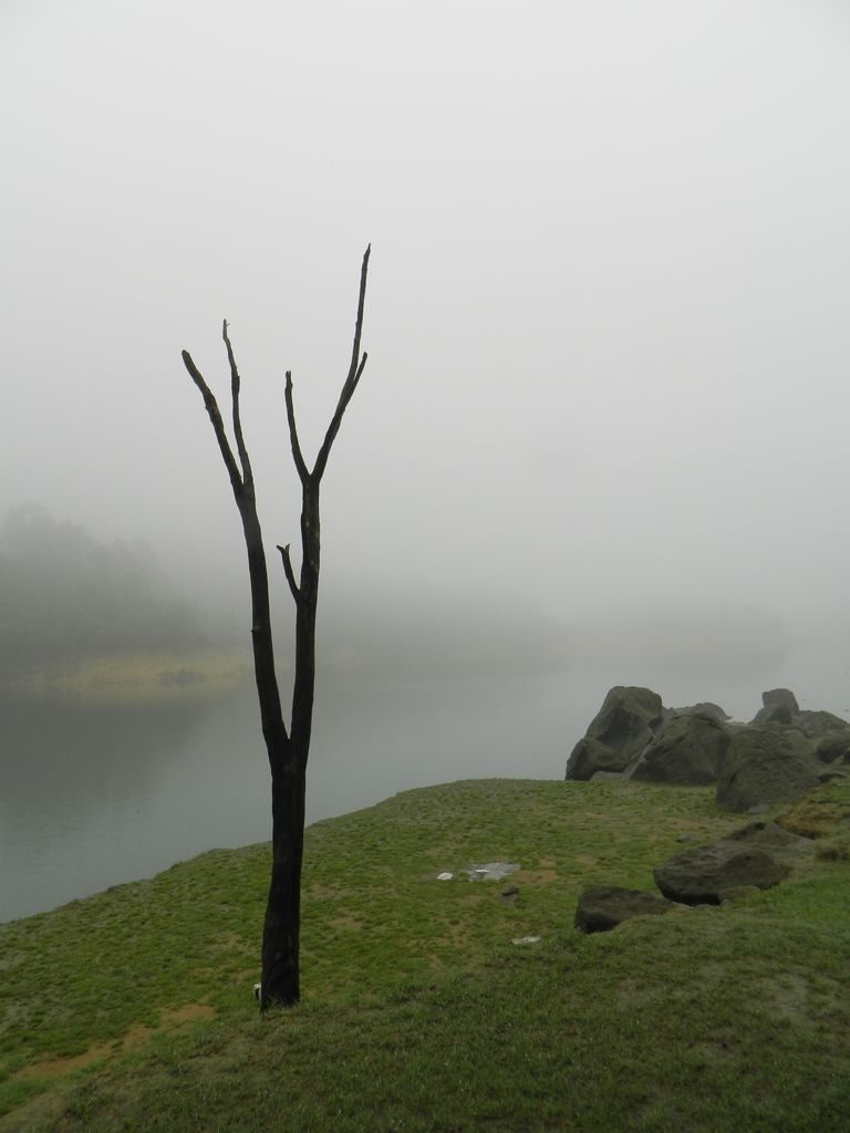 Туман в парке, Гонконг