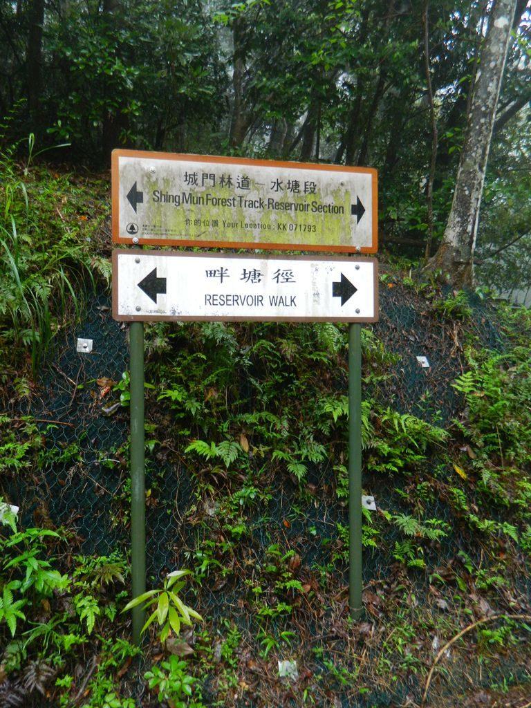 Shing Mun Country Park, Гонконг