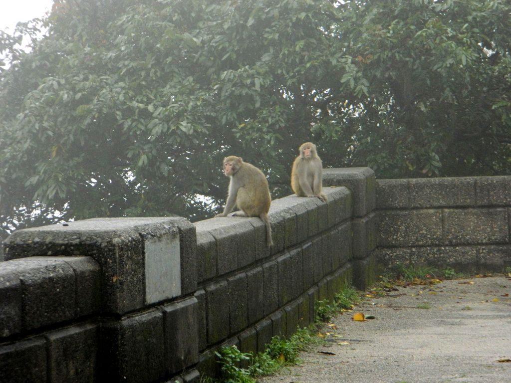 Обезьяны в парке, Гонконг