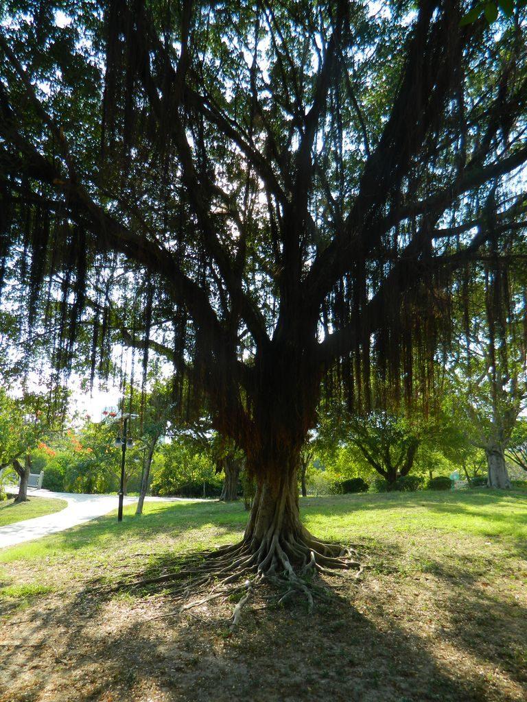 Байлу парк, город Санья