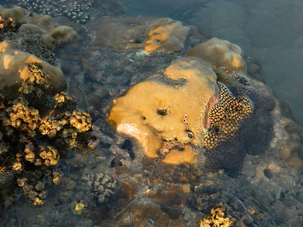 Кораллы возле отеля Мандарин, Дадунхай