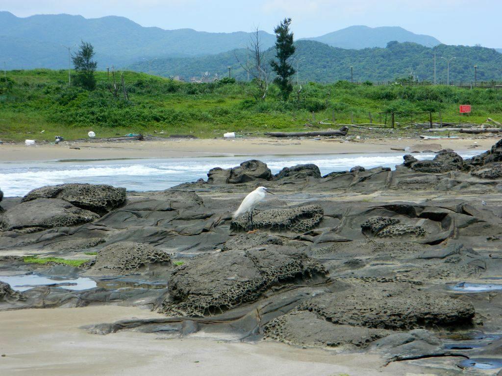 Цапля на камнях, Yanliao Beach, Тайвань
