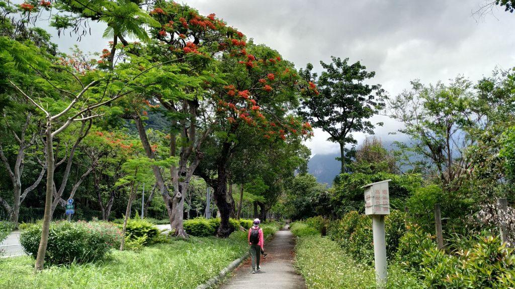 Дорога к национальному парку, Тайвань