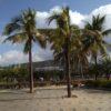 Пальмы, Хайнань