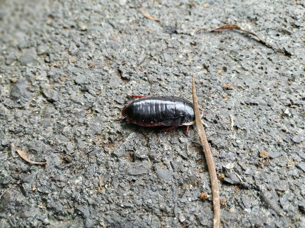 Огромный таракан на дорожке возле водопада