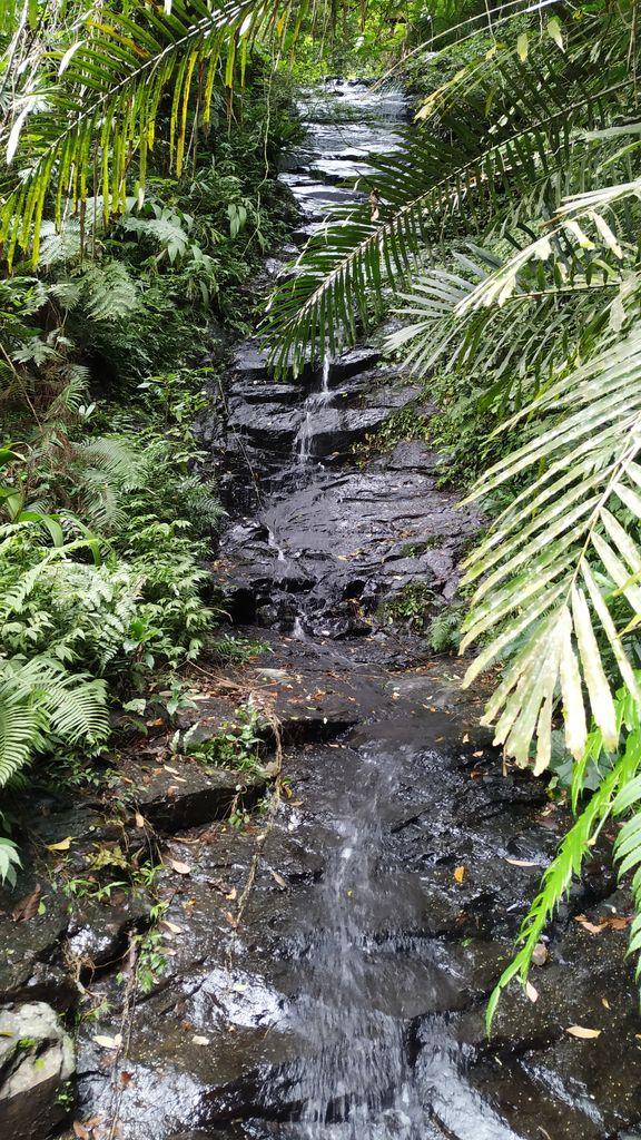 Тропический лес, Тайвань