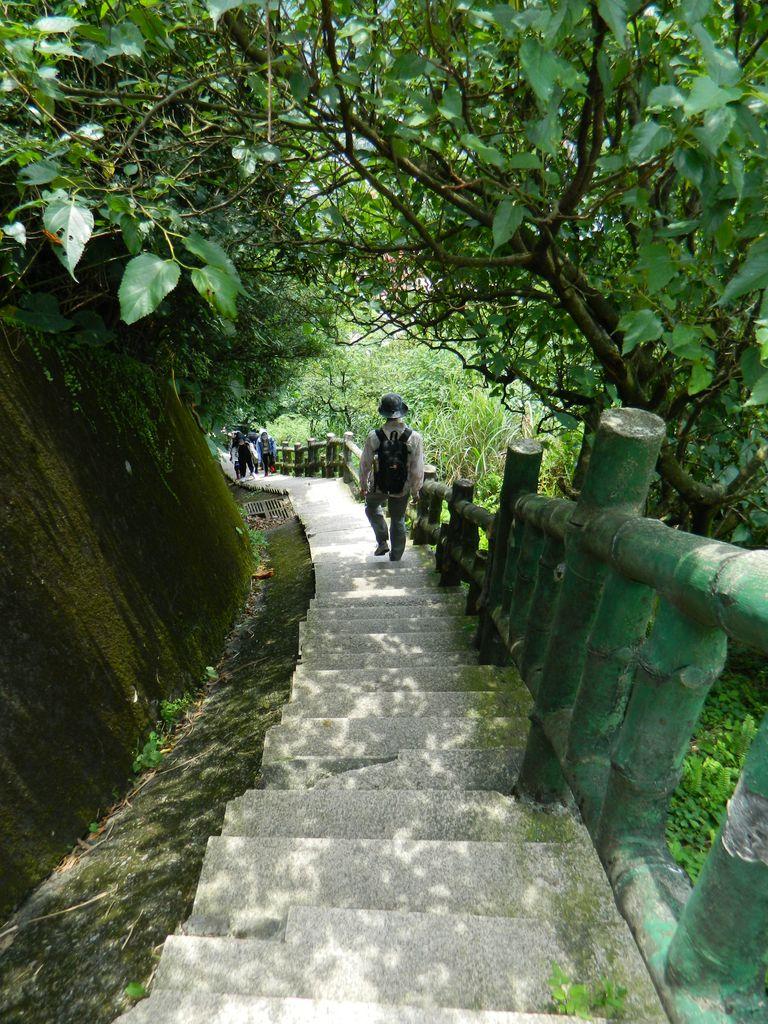 Одна из многочисленных лестниц на маршруте Teapot Mountain Trail, Тайвань