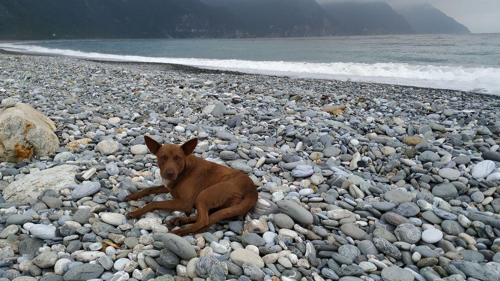 Собака на пляже Chongde, Тайвань
